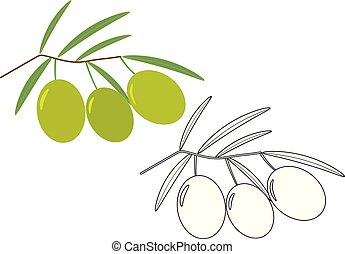 Olives, coloring page. Vector illustration.