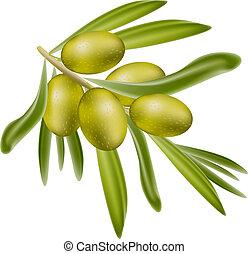olives., elágazik, zöld