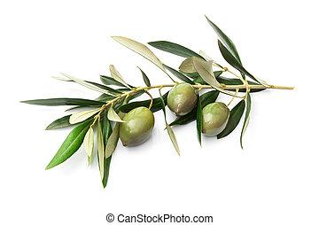 olives, feuilles, branche