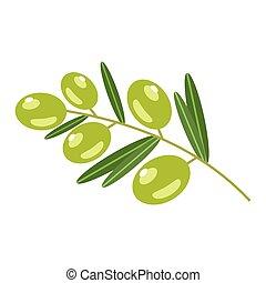olives, illustration, arrière-plan., vecteur, blanc vert