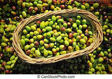 Olives in farmer basket at Mediterranean