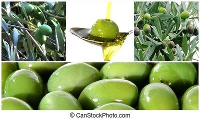 Olives montage - Collage including olive tree, olives...