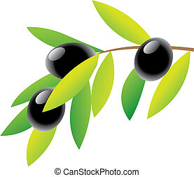 Olive Branch and green leaves isolated on white, vector illustration