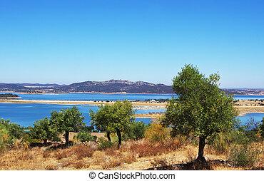 Olives tree near Alqueva lake, alentejo, Portugal