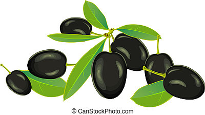 Olives, vector