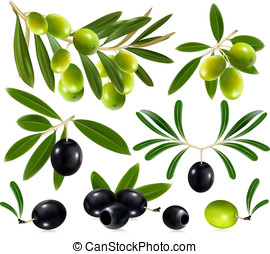 Olives with leaves - Green and black olives with leaves. ...