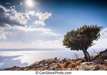 olivier, colline