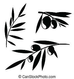 olivo, grafico, rami