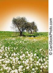 olivové barvy kopyto
