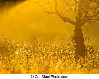oliwne drzewo, ogień