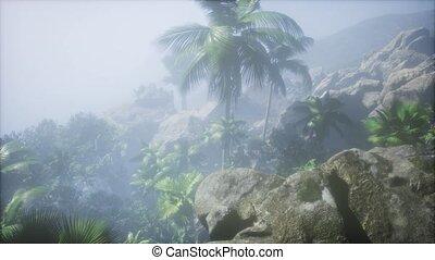 olja, antenn, ögon, plantation., träd, förbluffande, thailand., palm, utsikt., fåglar, soluppgång