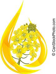 olja, flower., canola, oil., droppe, stylized, rapsfrö