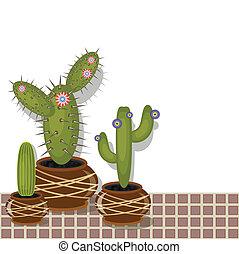 olla, cactus