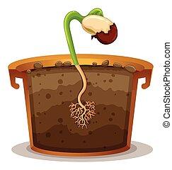olla planta, arcilla, crecer