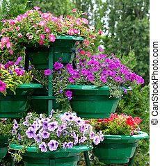 ollas, flores, petunia, aire libre