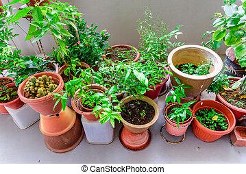 ollas, público, orgánico, balcón, hierbas, jardín, vegetal, caja, encima, singapur, flores