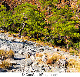 olympos mountain bush anatolia heritage ruins from the hill in asia turkey termessos old architecture and nature
