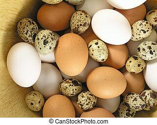 eggs - OLYMPUS DIGITAL CAMERA          eggs