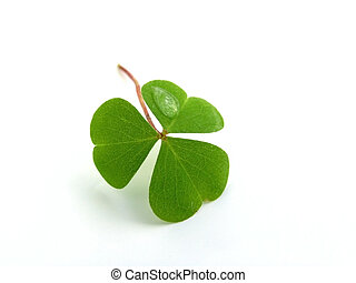 OLYMPUS DIGITAL CAMERA fresh, green clover isolated on white background