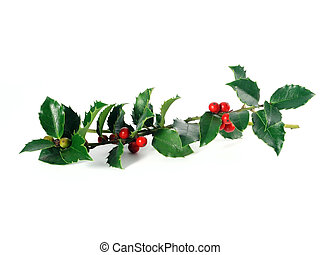 OLYMPUS DIGITAL CAMERA green holly on white background (isolated)