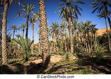 (oman), mezzo, oasi, deserto