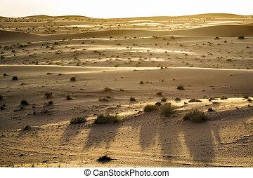 oman, soir, désert, humeur