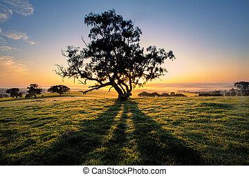 ombre, albero