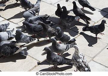 ombre, pietra, piccioni, su, floor., (birds), chiudere, forte, vista