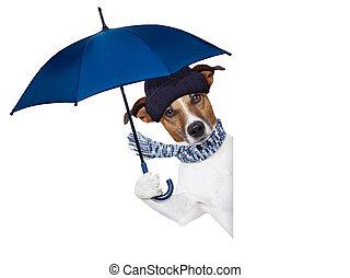 ombrello, cane, pioggia