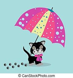 ombrello, gatto