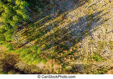 ombres, bourdon, quelques-uns, dernier, vert, lancement, forêt, straingt, moissonné, au-dessus, arbres, prise vue., c'est, capturé, aera, sommet