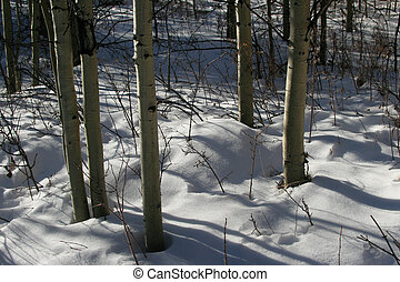ombres, neige
