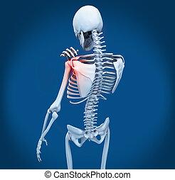 ombro, dor, esqueleto