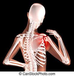 ombro, dor, esqueleto, femininas