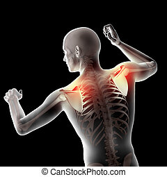 ombro, figura, médico, 3d, destacado, macho, lâminas