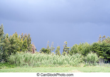 ominoso, nuvens escuras, de, tempestade, e, vívido, terra verde, em, a, fundo
