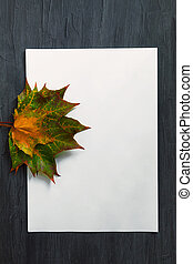 On a black background in the center lies an empty white sheet of paper and maple leaves