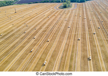 on a field lie numerous bales of straw