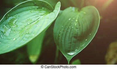 On a green wet leaf on a Sunny day posted a transparent drop...