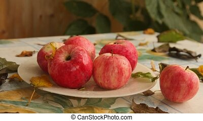 on a plate with wet apples on a table in the autumn garden, crawling bug