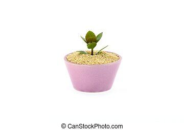 On a sesame seed grows flower in cup