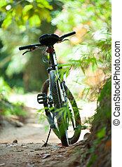 On a sunny summer day, biking.