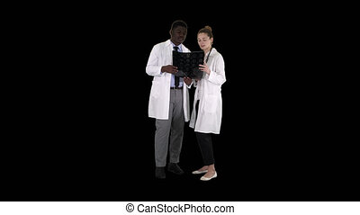 On Alpha Matte. Full length. Serious nice woman doctor and afro american doctor study brain x ray, Alpha Channel Professional shot in 4K resolution. 012. You can use it e.g. in your commercial video, medical, business, presentation, broadcast