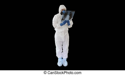 Infectious disease doctor in protective antibacterial suit and medical mask Pulmonologist examines an x-ray of lungs, Alpha Channel