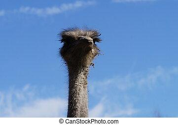 On an ostrich farm-3