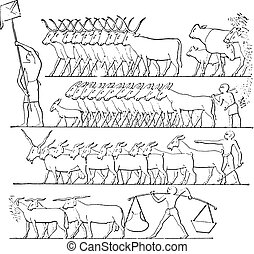 On behalf of cattle, vintage engraving.