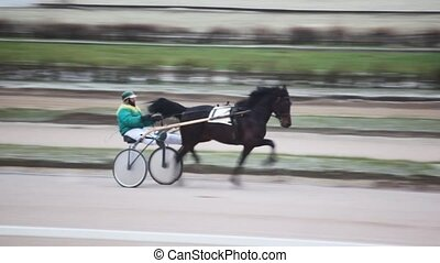 on hippodrome jockey sits in carts and operated thoroughbred...
