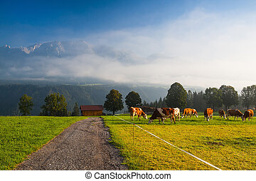 On pasture in the morning mist