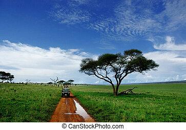 On safari in Tarangire National Park, Tanzania