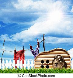 On the farm. Abstract rural backgrounds with funny cavia